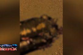 เต่าเคราะห์ร้าย โดนรถทับ กู้ภัยเร่งช่วยชีวิต