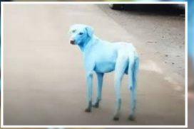 หมาต่างดาว? นครมุมไบวุ่นพบหมาสีฟ้าเดินเพ่นพ่านกลางถนนสาธารณะ