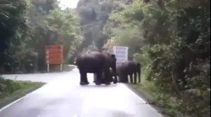 เตือนระวังช้างป่า