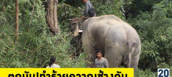 ช้างแสนรู้สวนสัตว์เชียงใหม่ ตกมัน ทำร้ายควาญช้างดับ