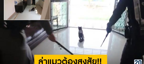 ล่าแมวต้องสงสัย!! ติดเชื้อพิษสุนัขบ้า