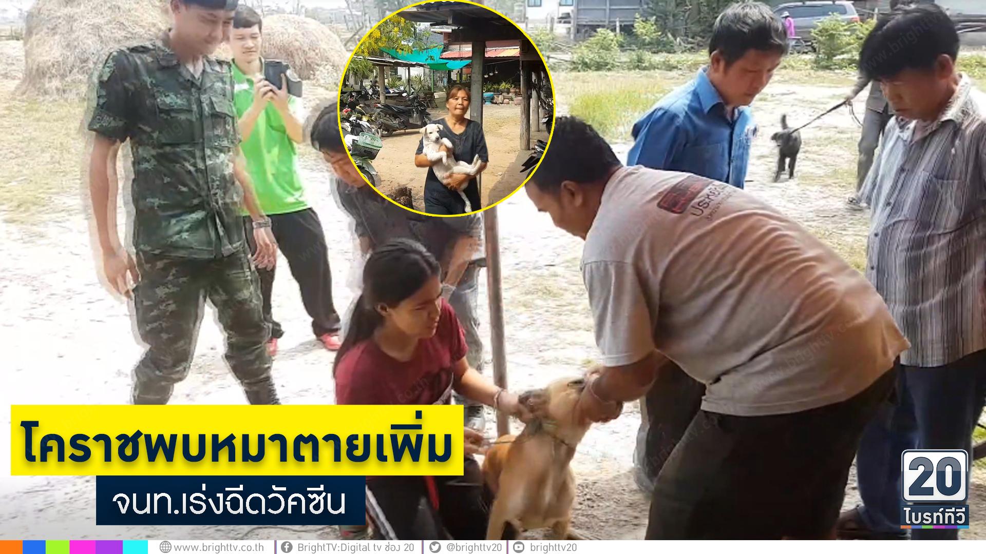 โคราชพบหมาตายเพิ่ม จนท.เร่งฉีดวัคซีน