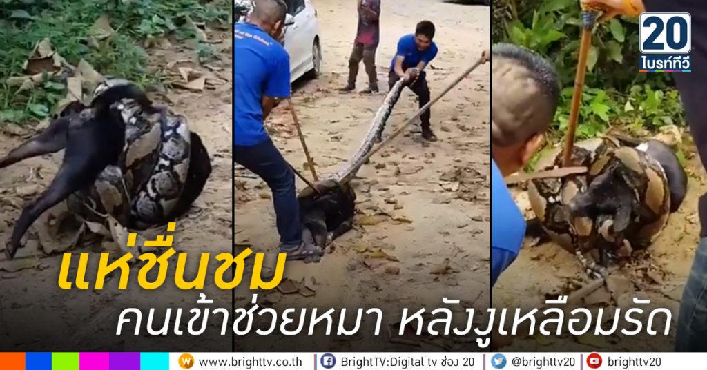 คนเข้าช่วยหมา-หลังงูเหลือมรัด