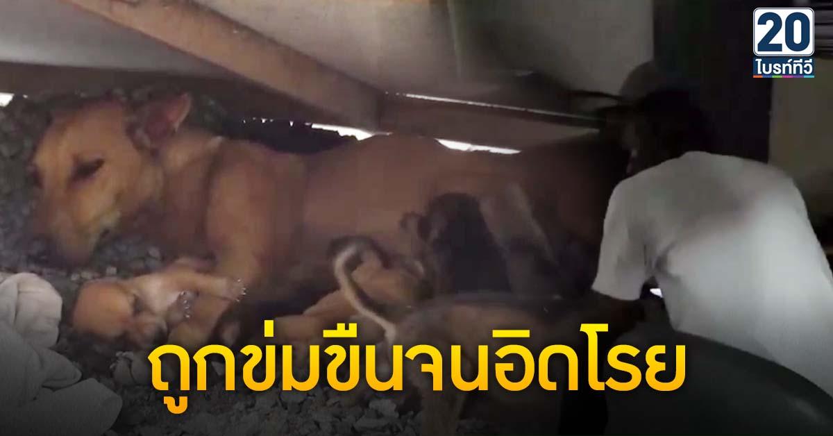 รปภ.ข่มขืนสุนัขแม่ลูกอ่อน