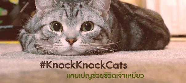KnockKnockCats