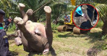 ช้างอ่างฤาไน