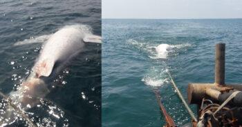 ฉลามวาฬยักษ์