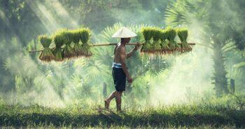 www.เยียวยาเกษตรกร.com