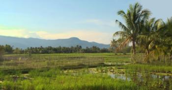 cambodia-rice-exportationปก