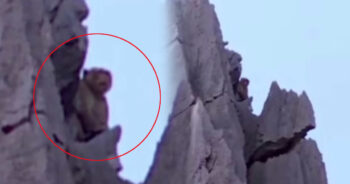 ลิงยักษ์ พญาวานร เขาหน่อ