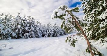 belarus-winter-snowปก