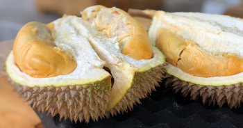 dream-durian