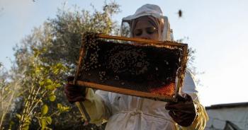gaza-strip-honey-beeปก