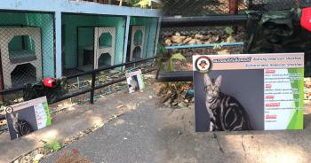 สวนสัตว์ แมว ปก
