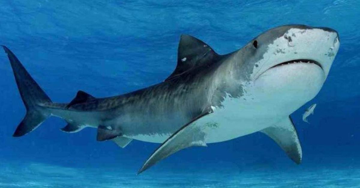 australia-shark-electronics-toolปก